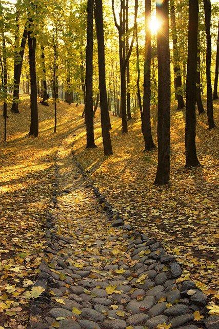 foreststonepath